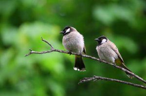 Vrabiutele